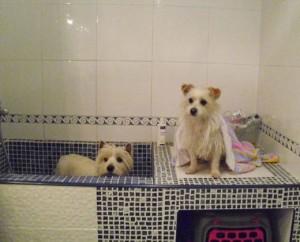 Bañera para perros
